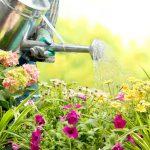 Waldsteinia Ternata, zou jij mooie planten willen hebben?